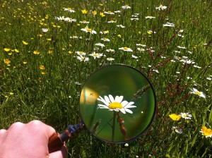 magnifying-glass-479742_1920